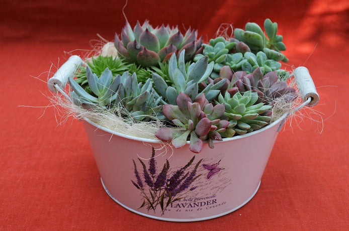 succulents decorations