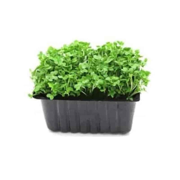 Mustard Cress Punnet - Get Fresh & Fruity
