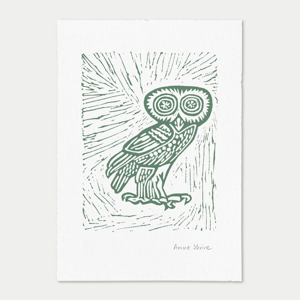 <strong>Little Owl</strong><br>Willow