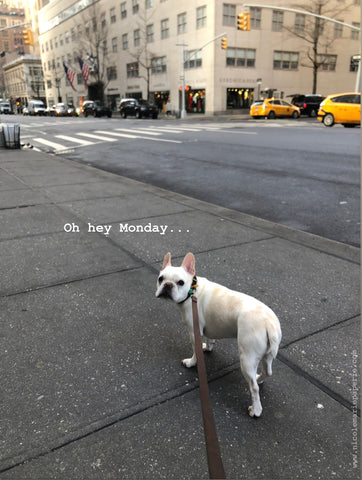 french bulldog, manhattan, new york city, upper east side, dog walking, taxi