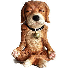 Dog in Meditation