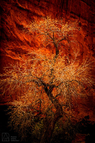 Long Canyon Cottonwood - Dan Holmes