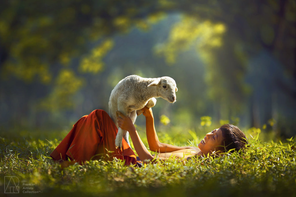 Little Sheep - Rarindra Prakarsa