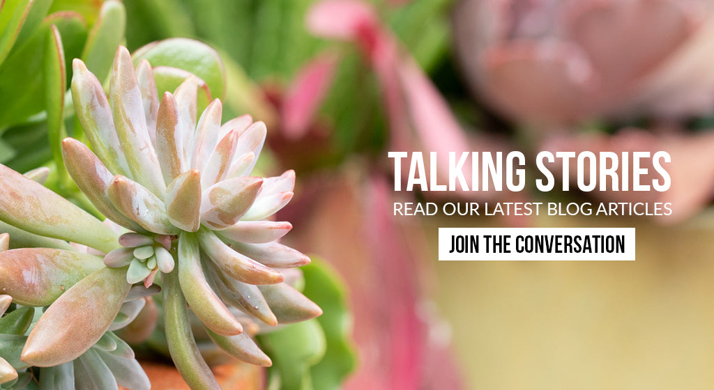 Talking Stories | Read our Latest Blog Articles