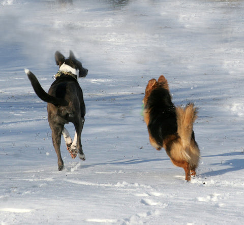 two dogs running away