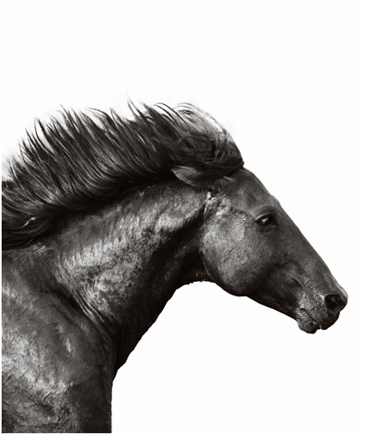 Nick Leary Wild Stallion 39x47 $5500