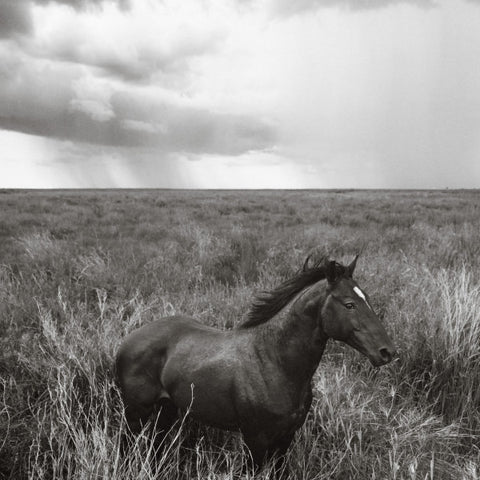 Nick Leary Solo Stallion 38x43 $3800