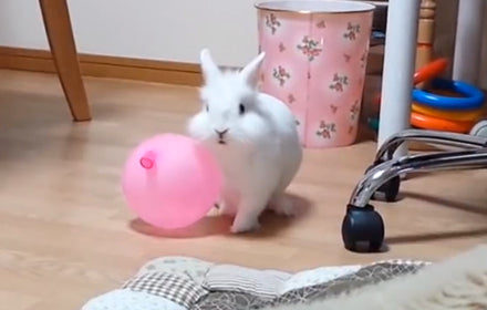 JUST A RABBIT WITH A BALLOON