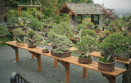 The Unobtainable Future :: The Dedication of Bonsai Mirai