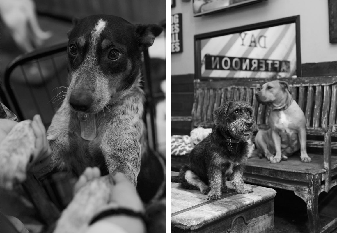 The Story Behind Fairfax's Beloved Pet Shop, Bark n' Bitches