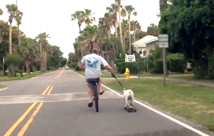 JUST A DOG CRUISIN' ON A SKATEBOARD