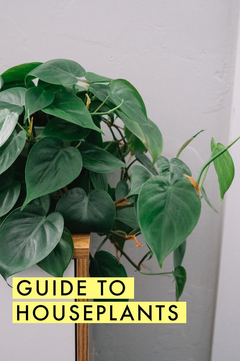 Guide to houseplants - I need this! | Taking care of plants | Home decor | limericki.com