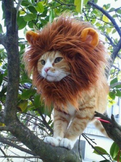 Costume De Lion Pour Chat