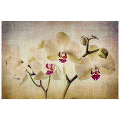 Pale Orchids Wide Painting