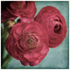 Posters & Prints - Red Ranunculus Painting