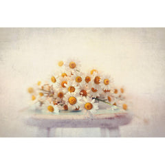 Posters & Prints - White Daisies Painting