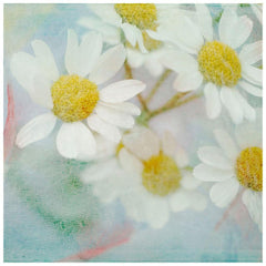 Posters & Prints - White Daisy Painting