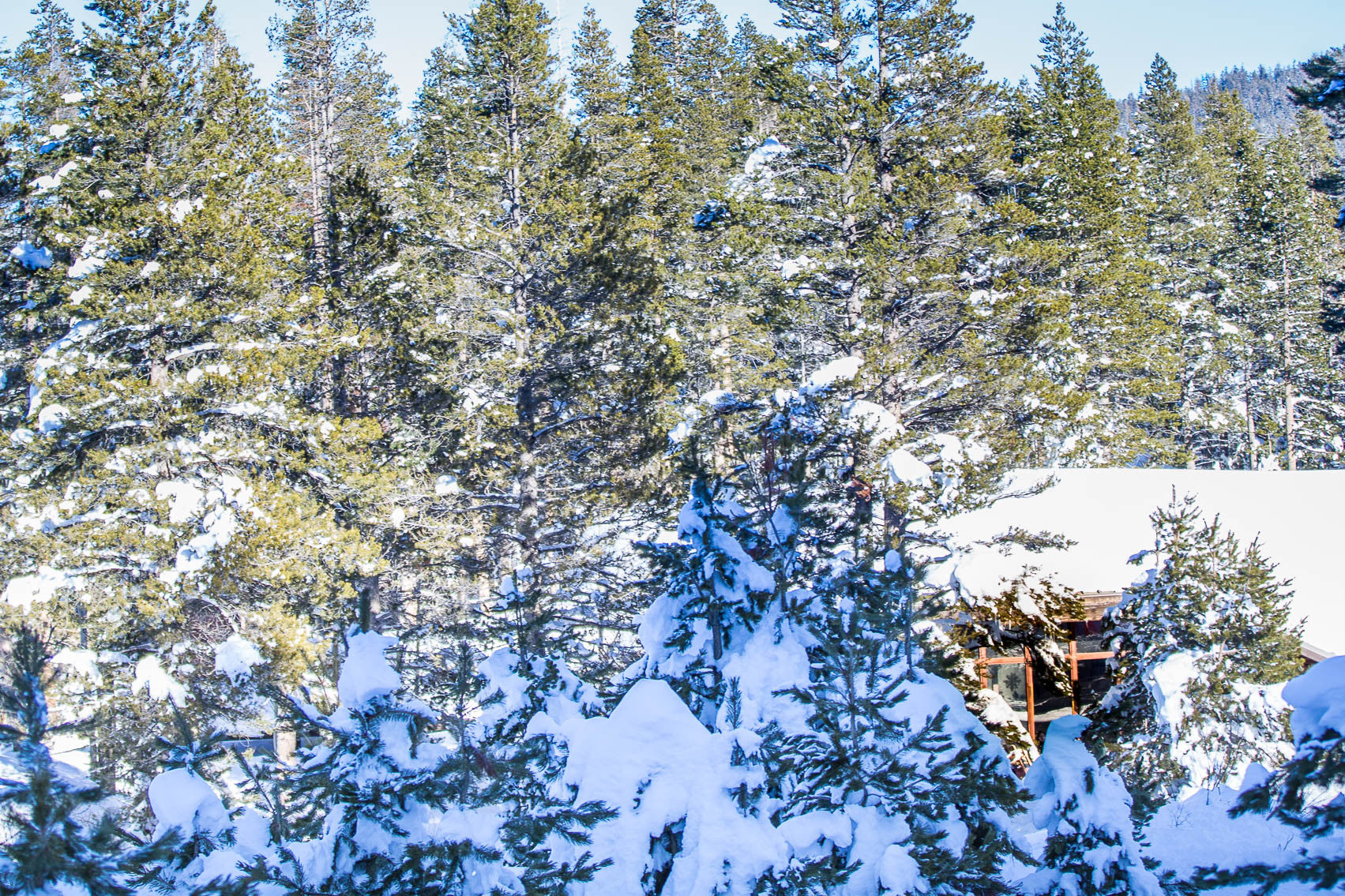 Renting a Cabin in Lake Tahoe