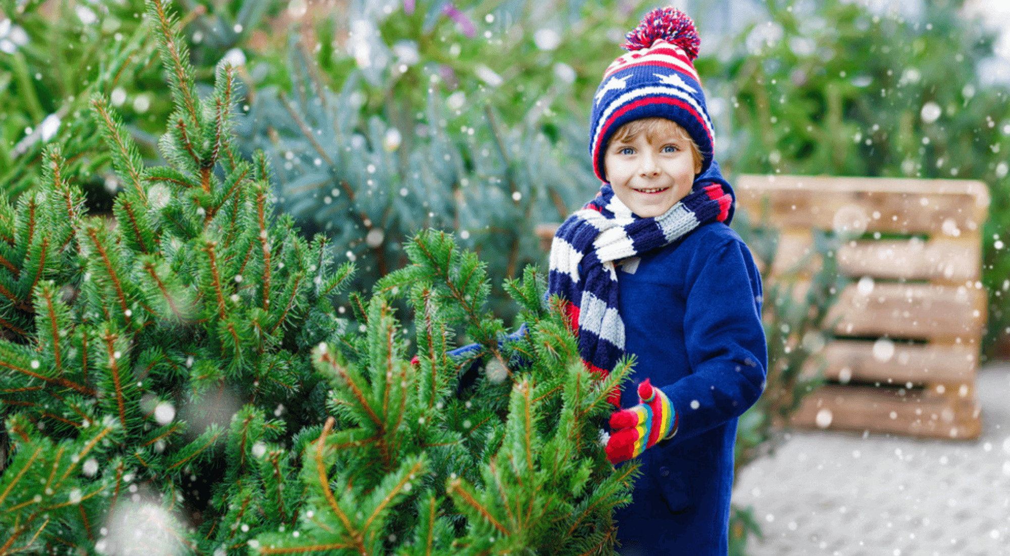boy holding christmas tree