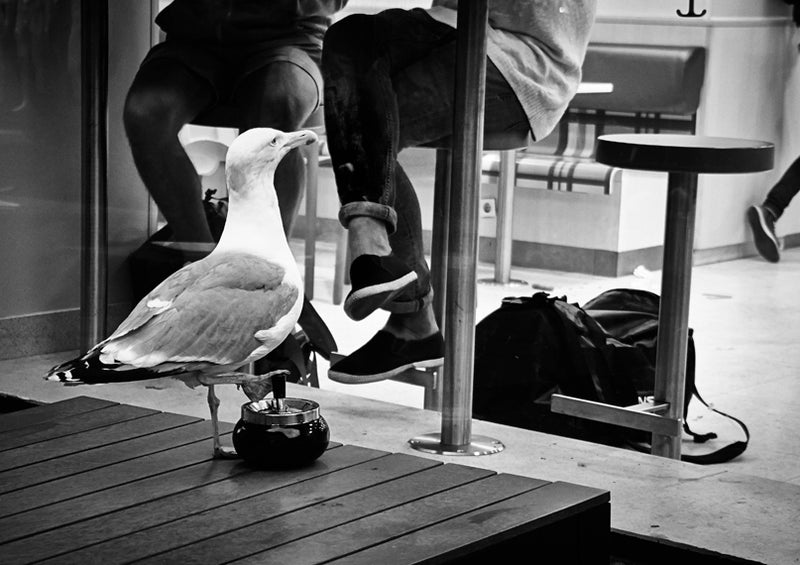 Black and white image of seagull