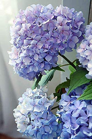 Pink Picasso Pink Picasso Adult Paint by Numbers Kit 16x20 (Happily Hydrangea) - DimpzBazaar.com