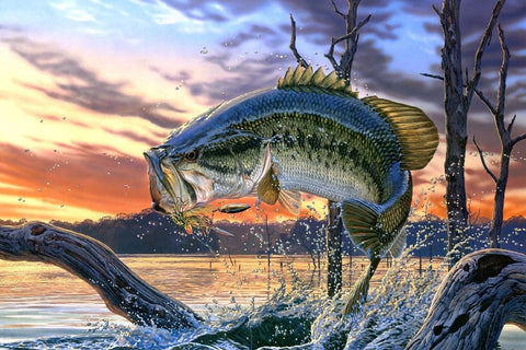 Bass Fishing Lake Sunset Painting Poster Art Silk Fabric Home Decoration Print-Dollar Bargains Online Shopping Australia