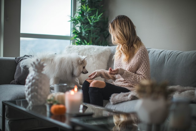 woman sitting on gray sofa in living room petting small white dog