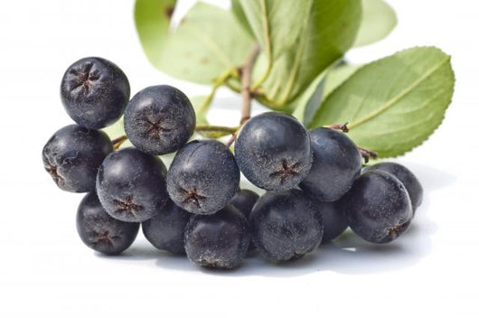 Aronia Fruit - Chokerberries- Aronia owoc