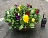 Spring Pansy Pots - OUT OF STOCK UNTIL SPRING 2021