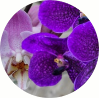 Gifts Actually - Lilac & Orchid Fragrance