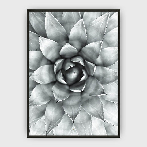 AGAVE PLAKAT
