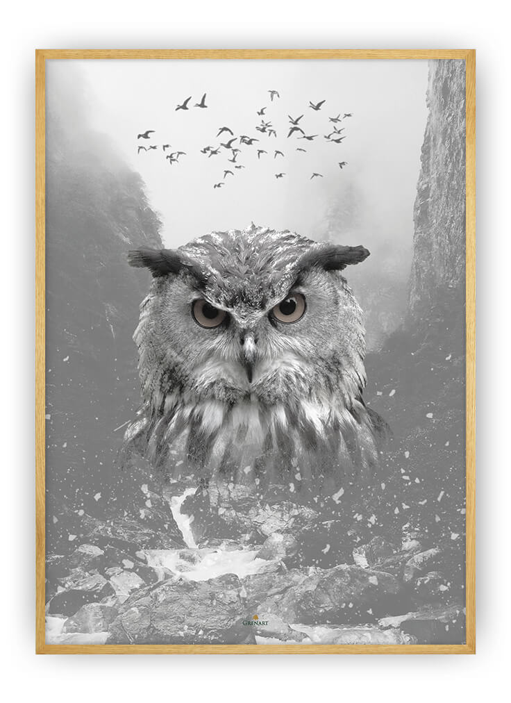 MOUNTAIN OWL