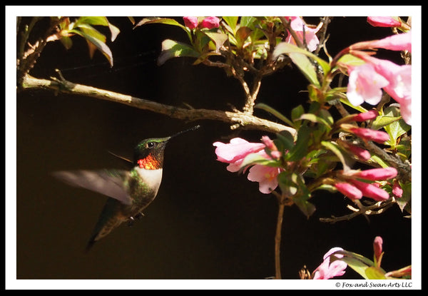 Blank Greeting Card - Hummingbird03