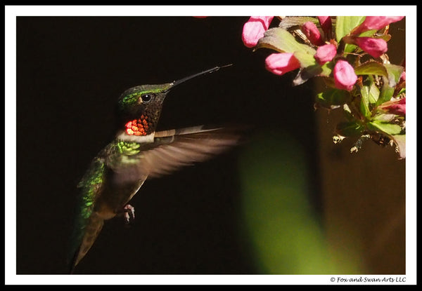 Blank Greeting Card - Hummingbird04