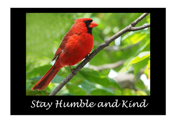 HumbleCardinal notecards and envelopes
