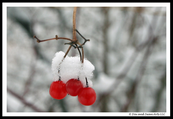 Blank Seasonal Card - WinterBerries01
