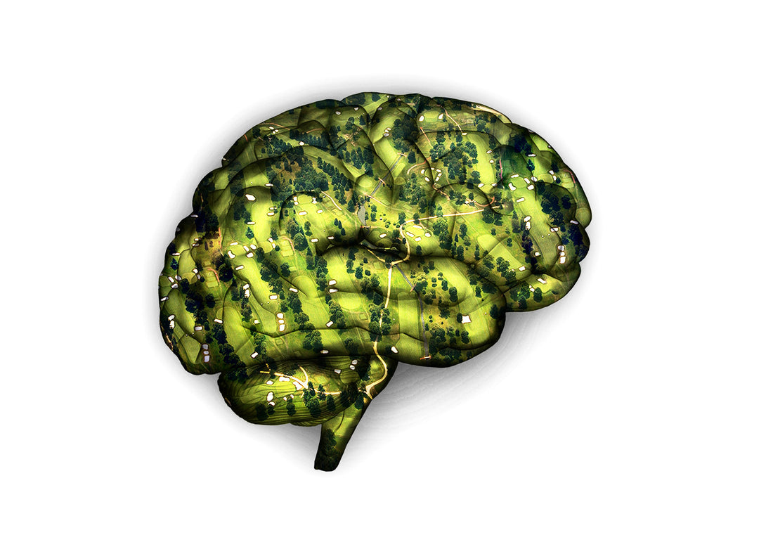 Golf IQ Test image brain with golf course