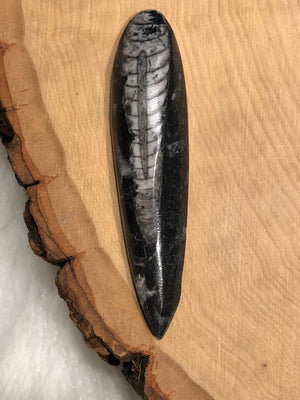 Orthoceras Fossil - Fossil - AlphaVariable