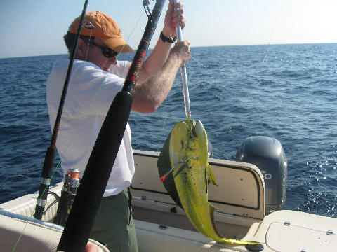 Mahi caught on a Pink & Blue Monkalur off the coast of Topsail, NC.