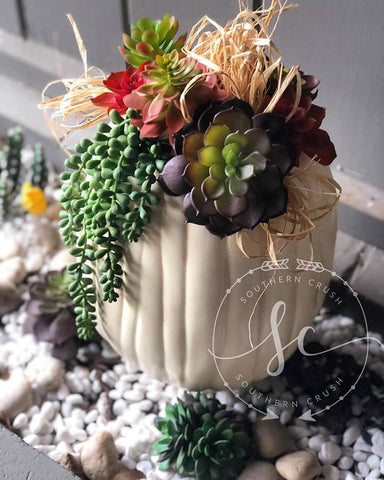 Succulent Pumpkin Decor with white faux pumpkins