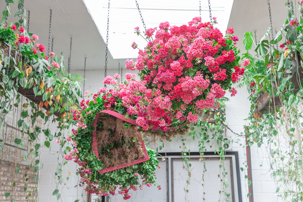 Hanging Flower Installation