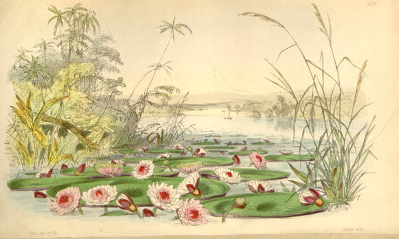 Botanical Print Of A Lake Scene