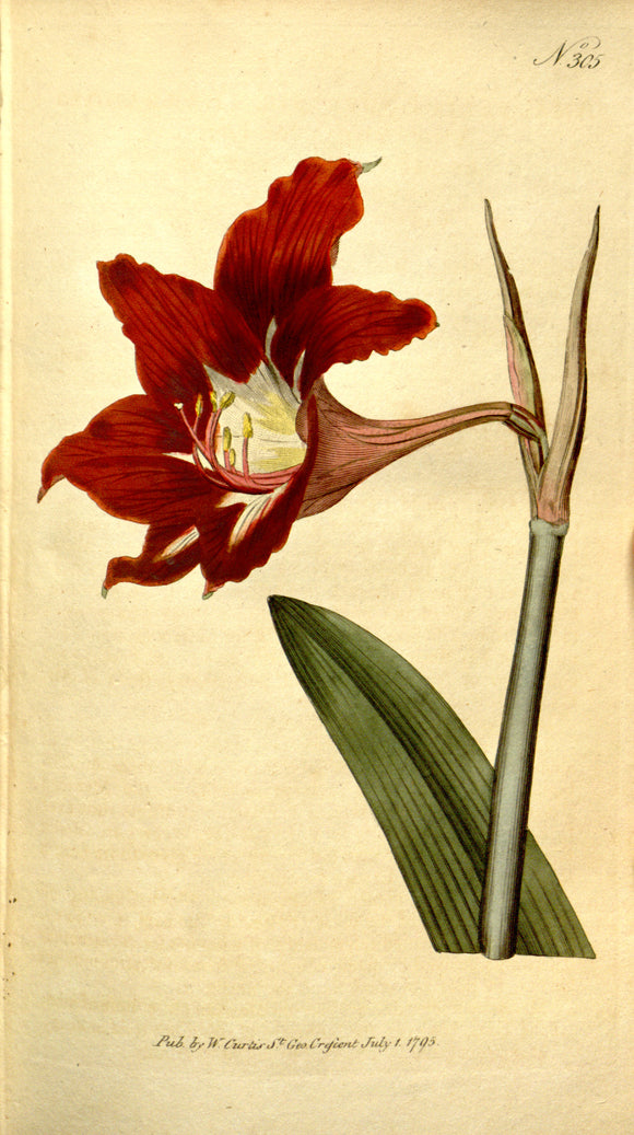 Botanical Print Of Red Flower