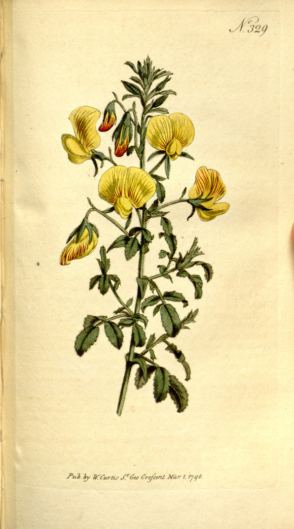 Botanical Print Of Yellow Flowers
