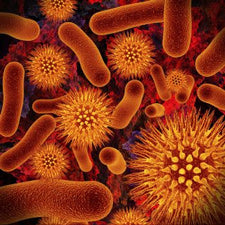 Microbial Contamination Control