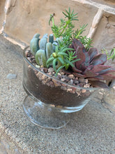 Succulent Arrangement in Glass