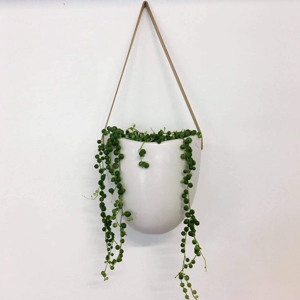Planter - Hanging | White Friday with live String of Pearls | Ceramic