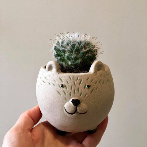 Planter with Live Cactus | Bear | Ceramic