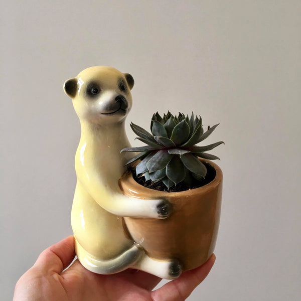 Planter with Live Succulent | Meekat #1 | Ceramic