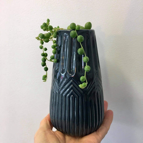 Vase Planter with Live String of Pearls | Navy | Ceramic